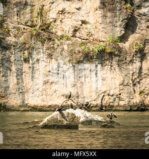 Birds sunbathing on rock in the Grijalva River of Sumidero Canyon Chiapas Mexico - Stock Photo