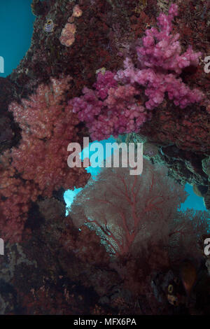 Unimaginable size of  coral gardens, diversity of forms and fabulous colors. Picture was taken in the Ceram sea, Raja Ampat, West Papua, Indonesia - Stock Photo