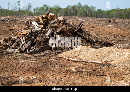 Clear cut Forest - Stock Photo