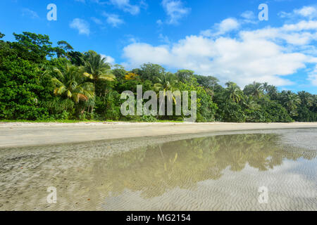 Idyllic Myall Beach bordered by the rainforest, Cape Tribulation, Daintree National Park, Far North Queensland, FNQ, QLD, Australia - Stock Photo