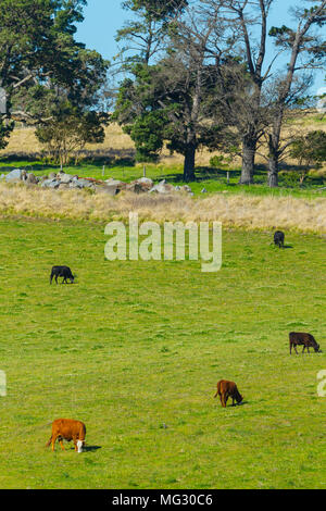 Rural farming land along Mount Lindesay Road on the outskirts of the town of Tenterfield in the New England region of New South Wales, Australia. - Stock Photo