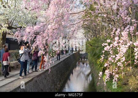 People walking along Philosopher's Path with cherry blossom, Kyoto, Kansai, Japan - Stock Photo