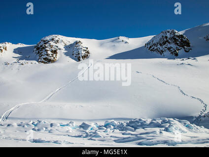 Polar bear tracks and slide marks in the snow on the hillside.  Baffin Island, Nunavut, Canada, arctic - Stock Photo