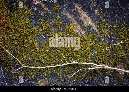 Green Moss Growing on Old Grunge Concrete Wall. - Stock Photo