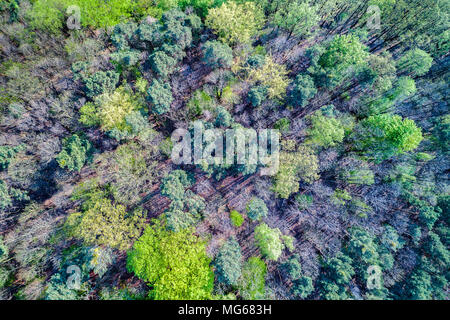 Aerial view of trees in the Palatinate Forest. Rhineland-Palatinate, Germany - Stock Photo
