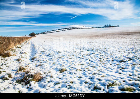 A winter morning on the Downs in Wiltshire. - Stock Photo