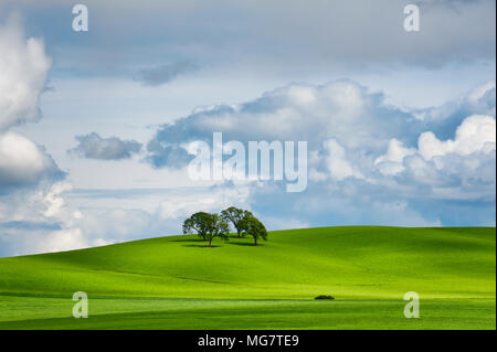 Under partially cloudy skies, four trees cast long shadows from sun rays on a green rolling hillside. - Stock Photo