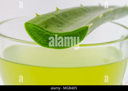 Aloe vera Can help neutralize free radicals Contributes to aging on white background - Stock Photo