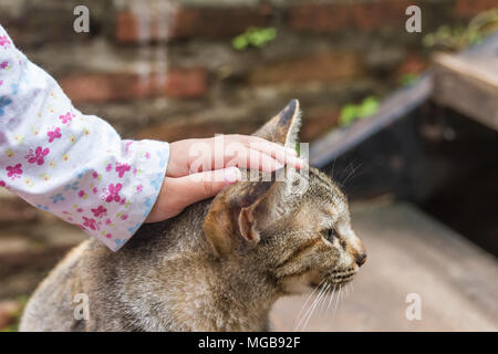 A tabby cat being stroked by a child hands - Stock Photo