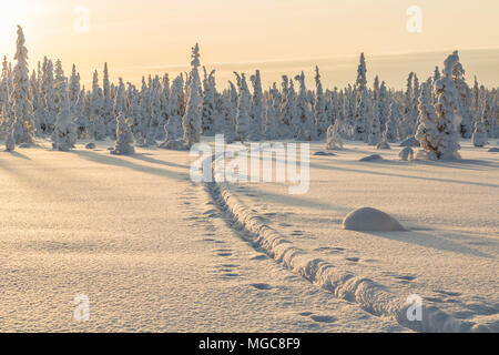 Winter landscape with reindeer tracks in the snow, clear skye and nice warm light, Gällivare county, Swedish Lapland, Sweden - Stock Photo