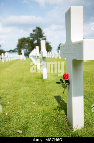 A single rose resting against a cross in a British War cemetery in Normandy, France. - Stock Photo