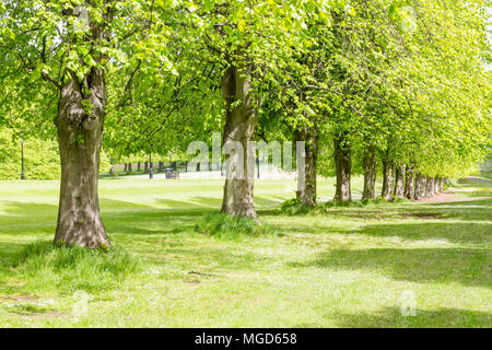 Belfast/N. Ireland - May 31, 2015: Trees line the Prince of Wales Avenue leading up to Parliament Buildings also known as Stormont. - Stock Photo