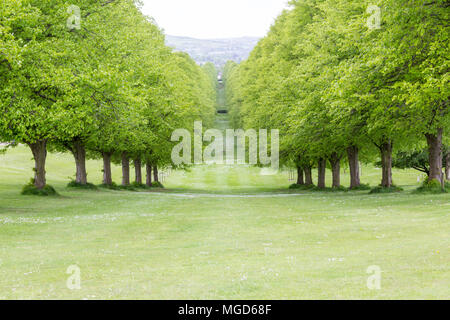 Belfast/N. Ireland - May 31, 2015: Trees line the Prince of Wales Avenue leading up to Parliament Buildings, also known as Stormont. - Stock Photo
