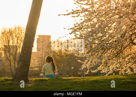 A girl meditates under the blossom of cherry trees in a park in North London - Stock Photo