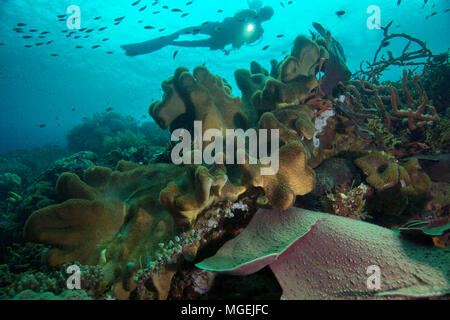 Beautiful soft and hard corals. Picture was taken in the Ceram sea, Raja Ampat, West Papua, Indonesia - Stock Photo