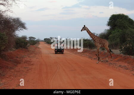 A jeep stops while a Giraffe crosses the road during a Safari in Kenya, with the sunset lights creating a breathtaking atmosphere - Stock Photo