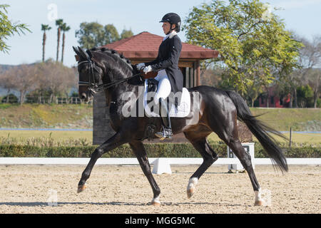 Irina Zakhrabekova & Quadroneur - Deutsches Reitpferd. Dressage - Stock Photo