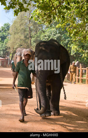 Vertical view of a mahout and his elephant at Pinnawala Elephant Orphanage in Sri Lanka. - Stock Photo