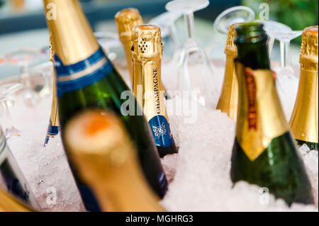 Champagne bottles in a bucket on ice in a cooler - Stock Photo