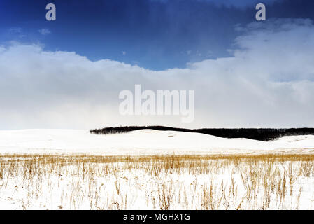 Winter snowscape of wild fields with weeds and large snow clouds and areas of blue sky with nobody in the wintry themed scene and landscape. Large for - Stock Photo
