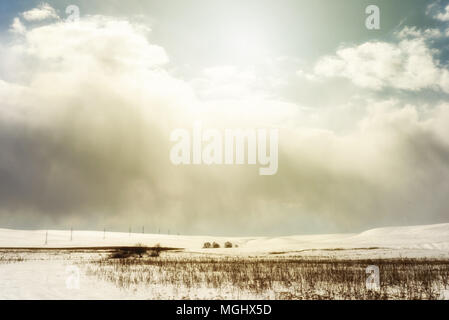Winter snowscape of wild fields with weeds and large snow clouds and areas of blue sky with nobody in the wintry themed scene and landscape. Row of py - Stock Photo