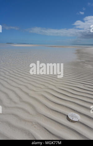A bright white sand dollar shell sits on rippled sand shaped by waves in the Sea of Abaco - Stock Photo