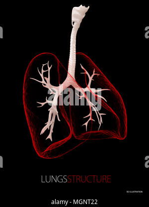 Structure of the lungs, Healthcare isolated black. 3d illustration. - Stock Photo