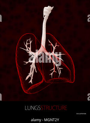 3d illustration of lungs structure, Healthcare isolated black. - Stock Photo