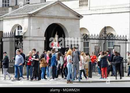 A mounted trooper of the Household Cavalry surrounded by tourists,on guard at Whitehall, Central London England UK - Stock Photo