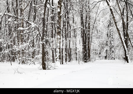 edge of snow-covered urban Timiryazevskiy park in Moscow city in winter - Stock Photo