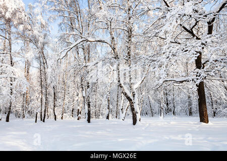 birch and oak trees in snowy Timiryazevskiy forest park of Moscow city in sunny winter morning - Stock Photo