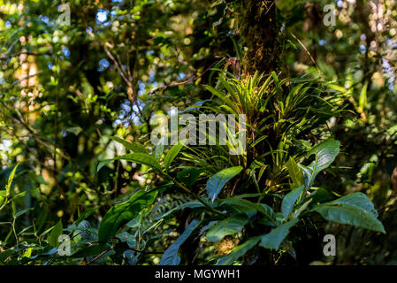 Tropical forest in Monteverde, Costa Rica - Stock Photo