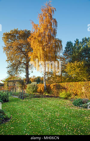 English country garden in the Autumn with Silver birch tree Betula pendula Beech hedge  Fagus sylvatica and English Oak Quercus robur - Stock Photo