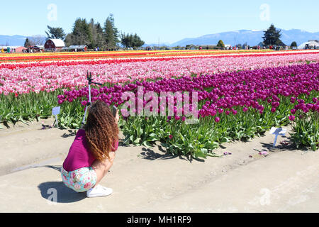 Young woman crouched low on the ground taking photos of the tulip flowers at the Skaigt Valley Tulip Festival in Mount Vernon, Washington, USA.  A tri - Stock Photo