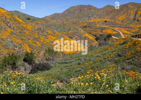 Super bloom on the hills in Wlaker Canyon California - Stock Photo