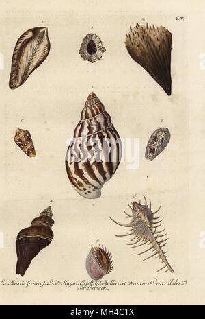 Whelk, Buccinum undatum 1, Noah's ark, Arca noae 2, noble pen shell, Pinna nobilis 3, Tusus brevis 4, Caltrop murex, Murex tribulus 5, Admiral cone, Conus admiralis 6, volute, Voluta arenata 7, limpet, Patella vulgata 8, and elegant Venus clam, Pitar dione 9. Handcoloured copperplate engraving by Georg Wolfgang Knorr from his  Deliciae Naturae Selectae of Kabinet van Zeldzaamheden der Natuur, Blusse and Son, Nuremberg, 1771. Specimens from a Wunderkammer or Cabinet of Curiosities of D. de Hagen, P.L. Muller and A.M. Schadeloock. - Stock Photo