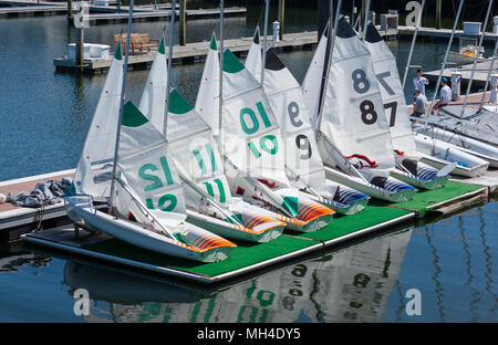 A fleet of ZForce C420 sailing dinghies sit docked at Marina Bay, in Quincy, Massachusetts, USA. - Stock Photo
