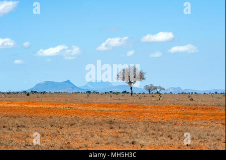 Beautiful landscape with nobody tree in Africa - Stock Photo