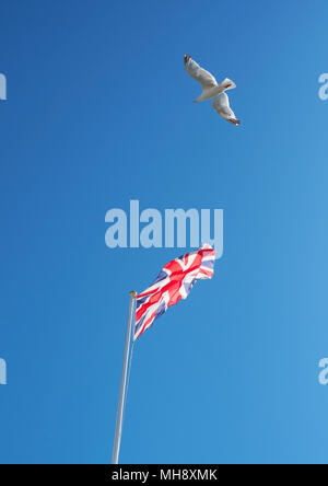 UK flying free - A Union Jack flag flying in a blue sky with a seagull - Stock Photo