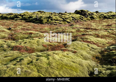 South Iceland. The vast Eldhraun lava field is covered with thick moss. It was created in the devastating eruption of 1784, the largest in history - Stock Photo