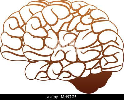 Human brain cartoon on orange lines - Stock Photo