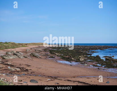 Dog Walkers in the distance on part of the Beach between East Haven and Arbroath, with the tide out and the Rock Strata exposed, Angus, Scotland. - Stock Photo