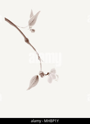 Minimalistic sakura branch with a delicate flower artistic oriental style illustration, Japanese Zen painting design isolated on - Stock Photo