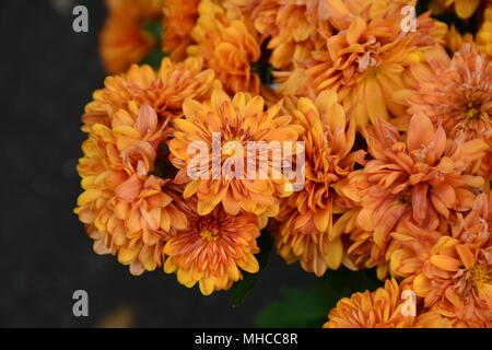 A potted plant with beautiful orange flowers and a white sofa in orange delicate pretty marigold flowers stock photo mightylinksfo