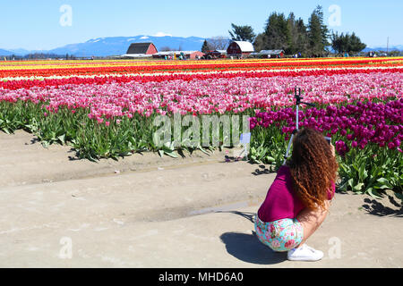 Young woman crouched low on the ground taking photos of the tulip flowers at the Skagit Valley Tulip Festival in Mount Vernon, Washington, USA.  A tri - Stock Photo