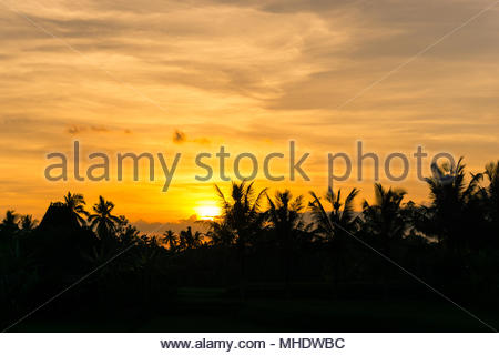 Sunset over rice fields - Stock Photo