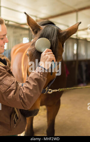 In the stable is a young rider with her race horse, a Hanoverian. She lovingly brushes the mane on the horse's forehead. The horse is brown and the yo - Stock Photo