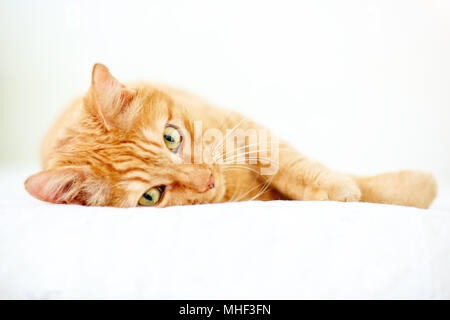 The lovely red cat lies on a sofa. - Stock Photo