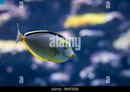 Fish in an aquarium - Stock Photo