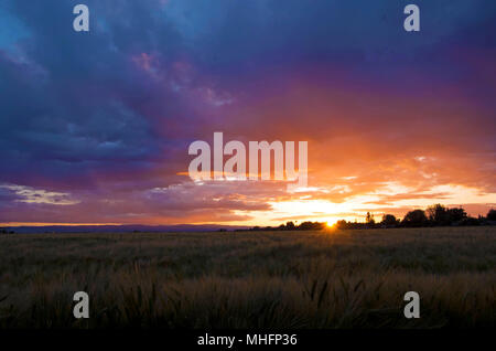 The sun sets over Woodland, CA. - Stock Photo